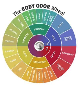 Fragrance of Sp body-odor-wheel